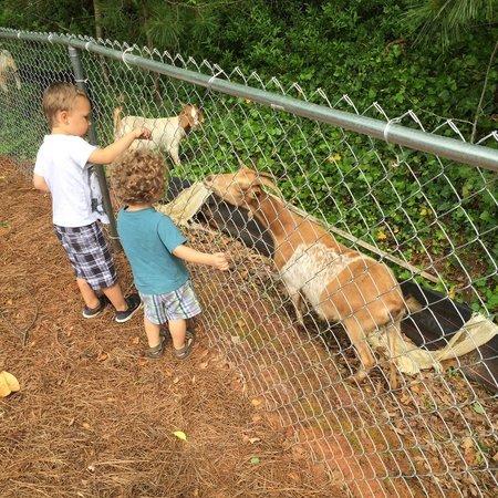Child Care Job in Longmont, CO 80501 - Babysitter Needed For 2 Children In Longmont. - Care.com