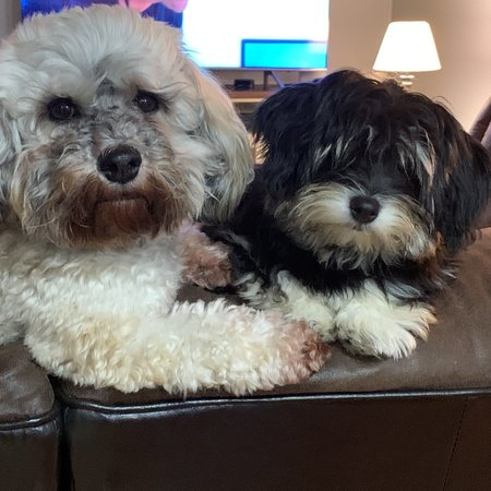 Pet Care Job in Dupont, WA 98327 - Looking For A Pet Sitter For 2 Dogs In Dupont - Care.com