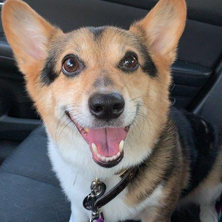 Pet Care Job in Evansville, IN 47712 - Boarding Needed For 1 Dog In Evansville - Care.com