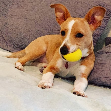 Pet Care Job in Austin, TX 78741 - Dog Sitter Needed - Care.com