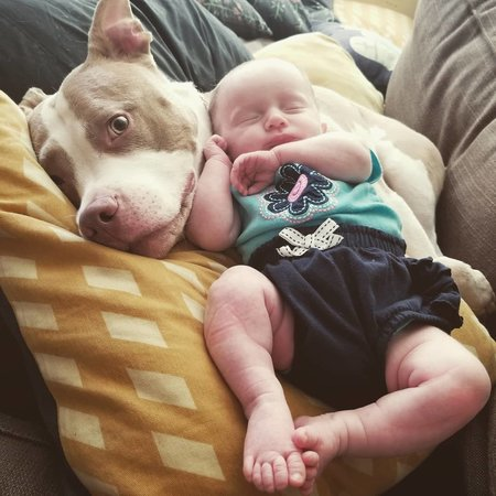 Pet Care Job in Baltimore, MD 21224 - Sitter Needed For 2 Dogs - Care.com