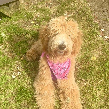 Pet Care Job in Half Moon Bay, CA 94019 - Boarding Needed For 1 Dog In Half Moon Bay - Care.com