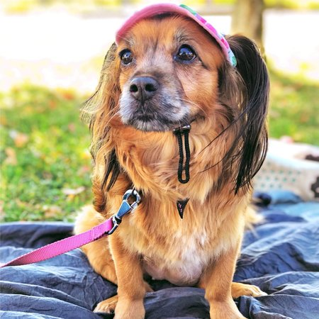 Pet Care Job in Long Island City, NY 11101 - Dog Sitter Needed - Care.com