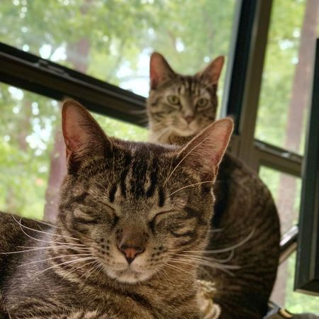 Pet Care Job in Durham, NC 27705 - Sitter Needed For 2 Cats In Durham - Care.com