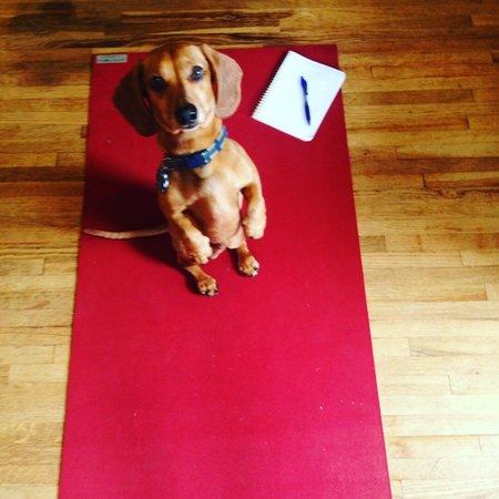 Pet Care Job in Redondo Beach, CA 90277 - Boarding Needed For 1 Dog In Redondo Beach - Care.com