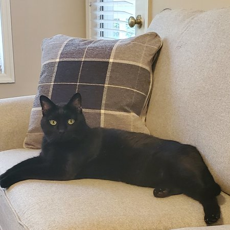 Pet Care Job in Hampton, VA 23666 - Sitter Needed For 1 Cat In Hampton - Care.com