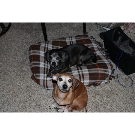 Pet Care Job in Holbrook, MA 02343 - Walker Needed For 2 Dogs In Holbrook - Care.com
